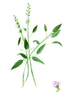 printable herbal clipart picture 2