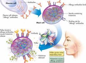 gamot sa allergy reinaitis picture 7