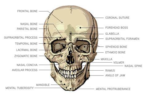 Herbal cranium picture 10