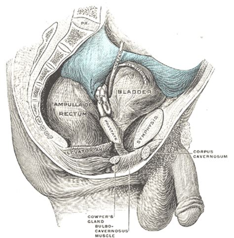 real pictures of abnormal penis picture 2