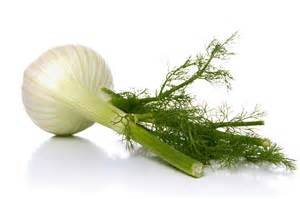 fennel picture 2