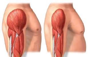 aging of a sketal muscle 18 picture 9