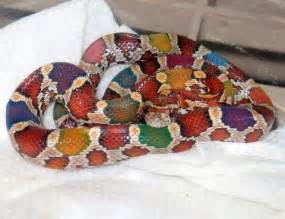 looking at different snake h picture 11