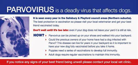 s parvovirus intestinal viruses picture 6