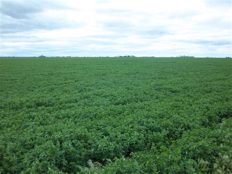 farming alfalfa picture 3