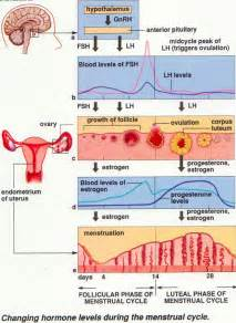 progesterone suppressed periods picture 10