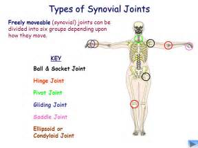 what is a pivot joint picture 19