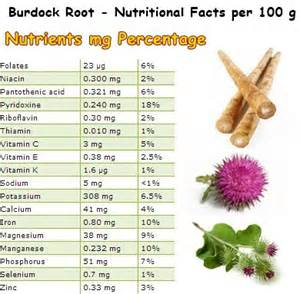 health benefits of burdock picture 7