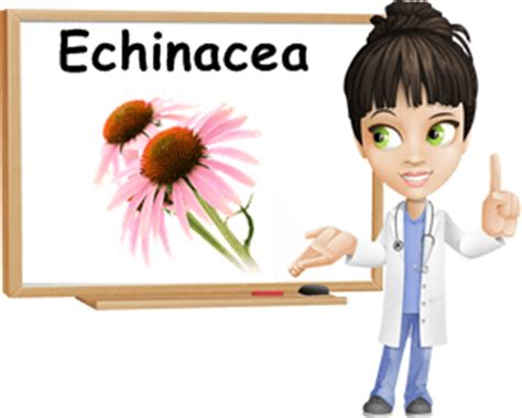 can pregnant women take echinacea picture 5