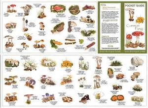 different types of fungus picture 2