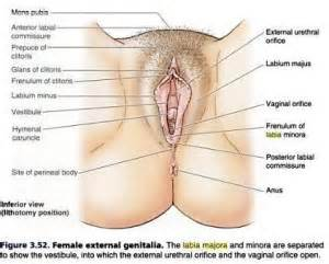male genital exam by female picture 2