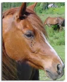 equine skin tumors picture 6
