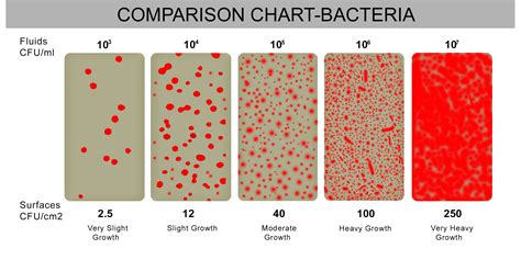 bacterial growth chart picture 7