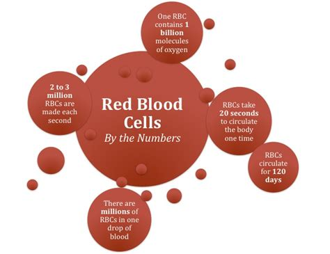 medical facts and diagram of how the blood picture 6