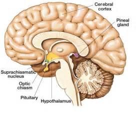 brain thyroid pulmonary syndrome prognosis picture 14