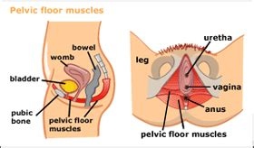 how to strengthen your bladder muscles picture 5
