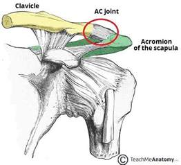 acromioclavicular joints picture 2
