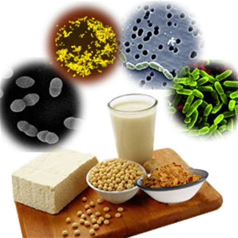 foods that contain probiotics picture 3