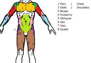muscle groups picture 14