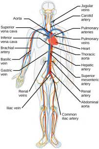 blood circulation legs picture 13