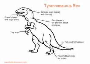 t rex teeth info picture 6