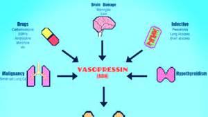 what is a hormone quizlet picture 7