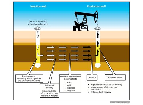 what is microbial enhanced oil recovery picture 4
