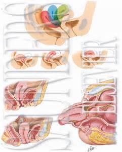 dropped bladder symptoms picture 13