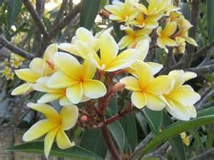 yarrow flower picture 5