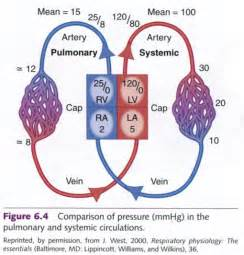 Lower systemic blood pressure picture 6