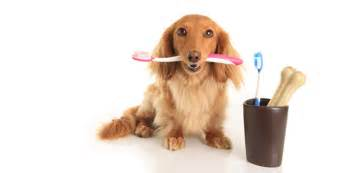 alternative dog teeth cleaning picture 10