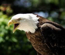 eagle health in north carolina picture 17
