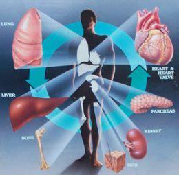 liver transplant harvest timt picture 6