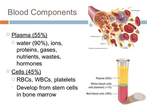 Physiology blood picture 5