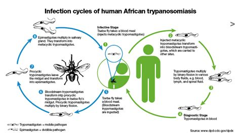 african sleeping sickness picture 19