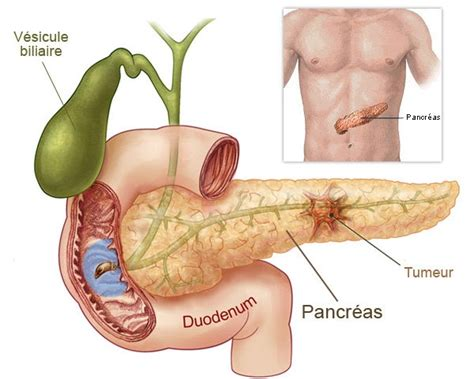 aging and pancrease picture 9