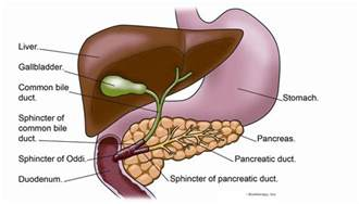 gall bladder schphincter picture 2