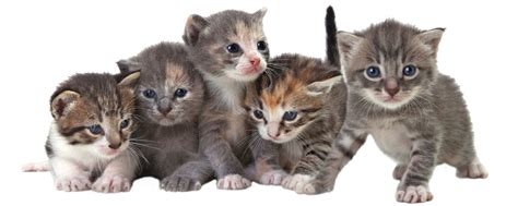 cats health picture 14