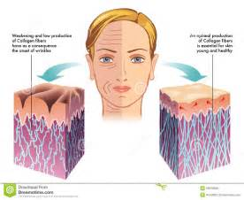 free images of aging skin illustration picture 2