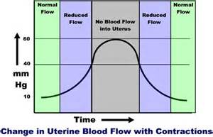 will blood flow to uturus decrease fsh picture 8
