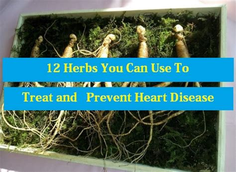 what herbs that can be used as abortion picture 7