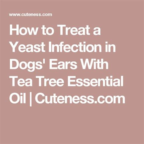 yeast infection tea tree treatment picture 11