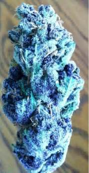 where can i buy blueberry haze herbal picture 14