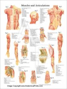 anatomy deep back muscle picture 3