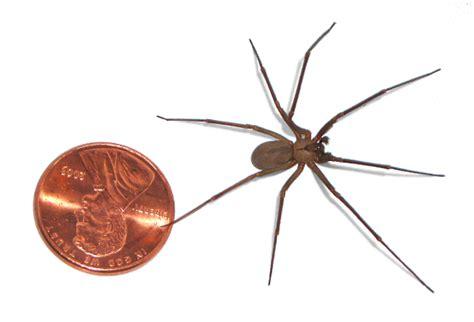 spider picture 1