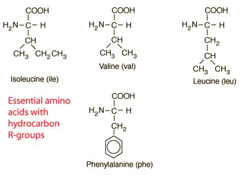 amino acids younger looking picture 9