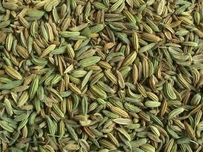 fennel seed picture 19