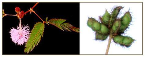 herbal medicine na pamparegla picture 3