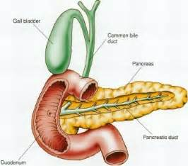 herbs that help in pancreatic beta cell neogenesis picture 8