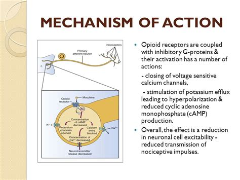 natural ways to stimulate your mu opioid receptors picture 9